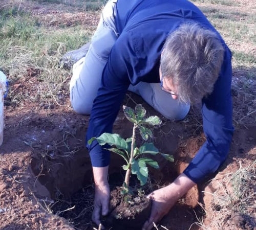 CEO leading tree planting at Miombo